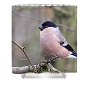 Female Bullfinch Shower Curtain