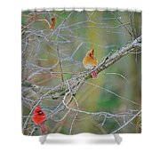 Female Cardinal And Friends Shower Curtain