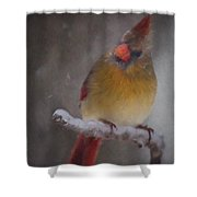 Female Cardinal In The Winter Shower Curtain