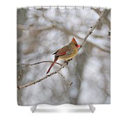 Female Cardinal In Winter Shower Curtain