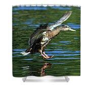 Female Duck Landing Shower Curtain
