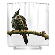 Female Flicker Shower Curtain