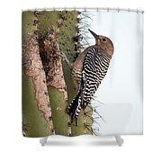 Female Gila Woodpecker-img__2691-2016 Shower Curtain