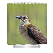 Female Grackle Shower Curtain