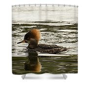 Female Hooded Merganser Shower Curtain