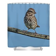 Female House Finch Resting Shower Curtain