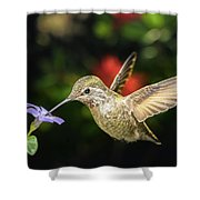 Female Hummingbird And A Small Blue Flower Left Angled View Shower Curtain