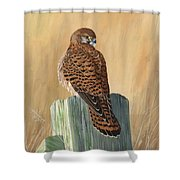 Female Kestrel Study Shower Curtain