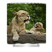 Momma Lion Over Cubs Attitude Shower Curtain