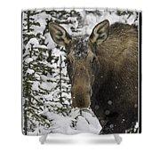 Female Moose In A Winter Wonderland Shower Curtain