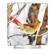 Female Northern Cardinal In The Snow Shower Curtain