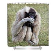 Female Pileated Gibbon, Gladys Porter Zoo Shower Curtain