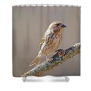 Female Purple Finch Shower Curtain