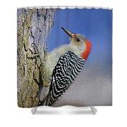 Female Red-bellied Woodpecker Shower Curtain