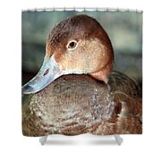 Female Redhead Duck Shower Curtain