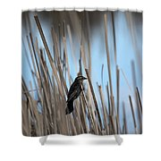 Female Redwing Shower Curtain