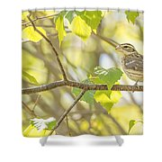 Female Rose-breasted Grosbeak Shower Curtain