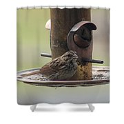 Female Sparrow On Birdfeeder Shower Curtain