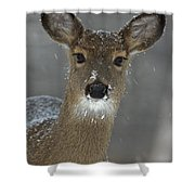 Female White-tailed Deer, Odocoileus Shower Curtain