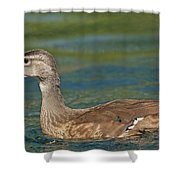 Female Wood Duck Shower Curtain