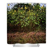 Fence Line Sunflowers Shower Curtain
