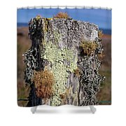 Fence Post Encrusted With Lichen  Shower Curtain