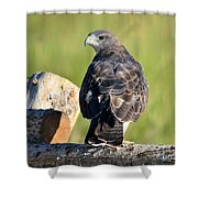 Fence Sitter Shower Curtain