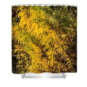 Fens In Fall Color Shower Curtain