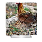 Feral Bird Shower Curtain