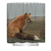 Ferdinand Fox  Shower Curtain