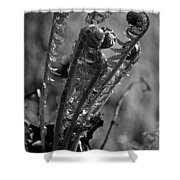 Fern 2 Shower Curtain