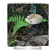 Fern And Mushroom Shower Curtain