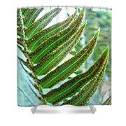 Fern Art Print Green Forest Ferns Baslee Troutman Shower Curtain