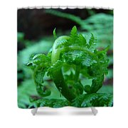 Fern Art Prints Green Forest Ferns Giclee Baslee Troutman Shower Curtain