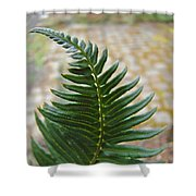 Fern Art Prints Green Garden Fern Branch Botanical Baslee Troutman Shower Curtain