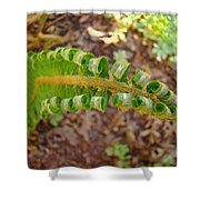 Fern Branch Leaves Art Prints Forest Ferns Natures Baslee Troutman Shower Curtain