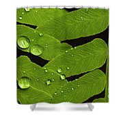 Fern Close-up With Water Droplets  Shower Curtain