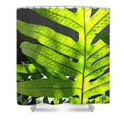 Fern Delight Shower Curtain