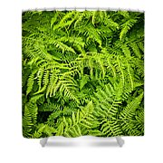 Fern Shower Curtain by Elena Elisseeva