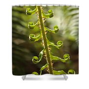 Fern Frond Shower Curtain