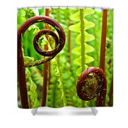 Fern Fronds Fine Art Photography Forest Ferns Green Baslee Troutman Shower Curtain