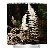 Fern Glow 2 Shower Curtain