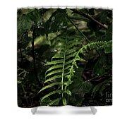 Fern Green Shower Curtain