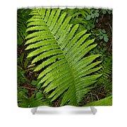 Fern Leaf In June Shower Curtain
