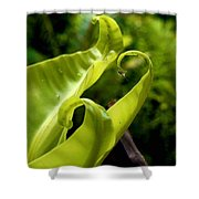 Fern Leaves Shower Curtain