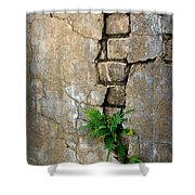 Fern Life Shower Curtain by Perry Webster
