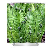Fern Meet And Greet Shower Curtain