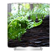 Fern On Redwood Tree Art Print Baslee Troutman Shower Curtain
