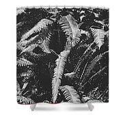 Fern Paradise  Shower Curtain