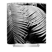 Fern Room Cycads Shower Curtain